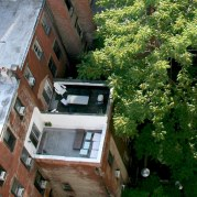no plants but.. テラスには緑は植わってないけれど、中庭の大木がその代わり